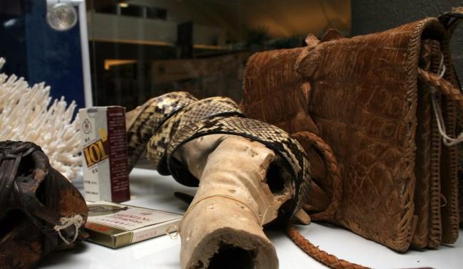 Il mercato italiano delle specie protette