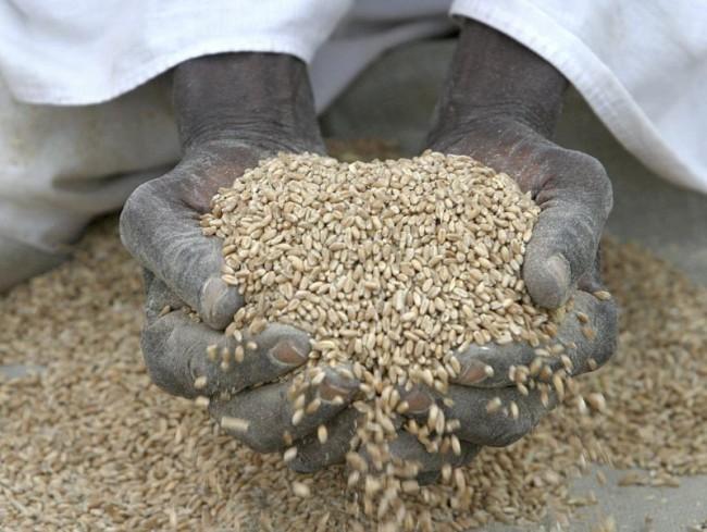 Sessismo, petrolio e biocarburanti: così cresce la fame