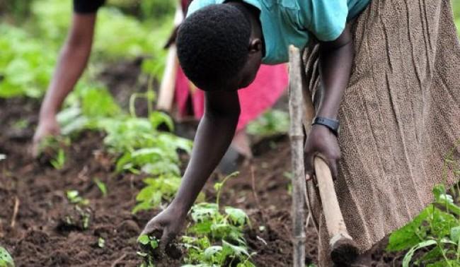 Rapporto FAO: i diritti delle donne per battere la fame