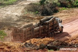 Greenpeace Amazzonia1 e1307310287615 Amazzonia, la mafia del legno uccide ancora