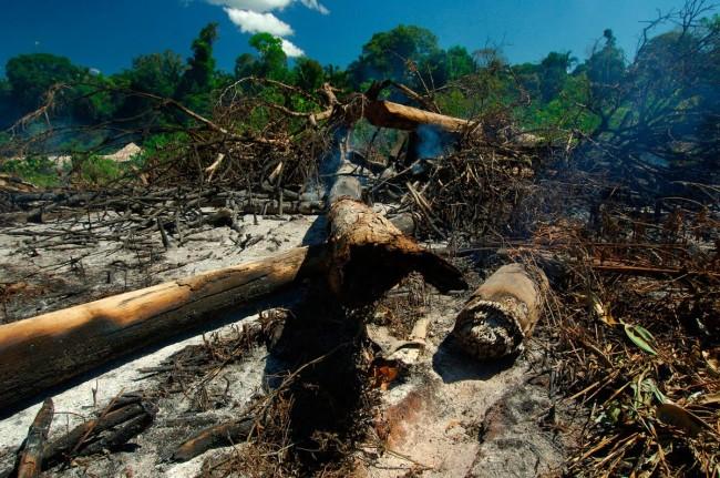 Amazzonia, la mafia del legno uccide ancora