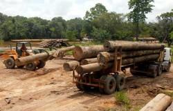ufficiali ambientali1 e1307310422446 Amazzonia, la mafia del legno uccide ancora