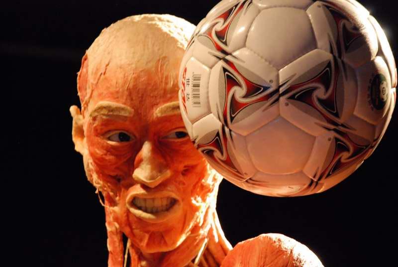 Body Worlds, De Humani Corporis Fabrica – Photogallery (ATTENZIONE, immagini forti)