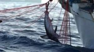 Pesca illegale, l'Europa chiede conto all'Italia