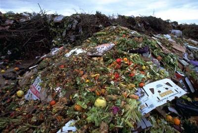 L'Occidente sovrappeso che spreca cibo, ogni anno 1,3 mld di tonnellate nella spazzatura