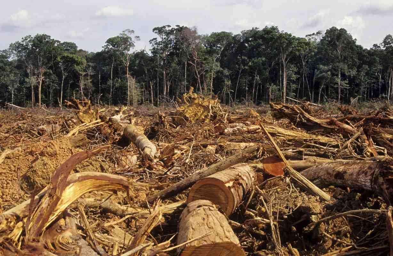 L'Europa e quel legno illegale