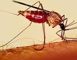 La malattia dimenticata che uccide 1,2 milioni di persone ogni anno