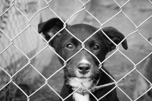 La strage silenziosa dei cani d'Ucraina per gli Europei della vergogna