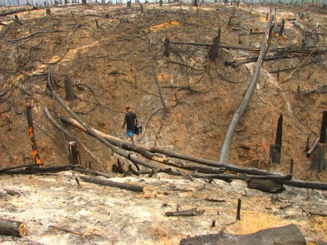 Il Brasile e quel nuovo Codice Forestale che uccide l'Amazzonia