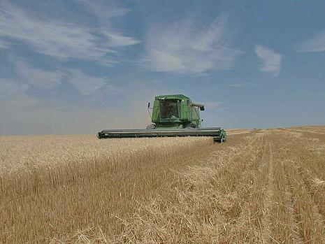 Negli Usa scoppia la crisi del grano